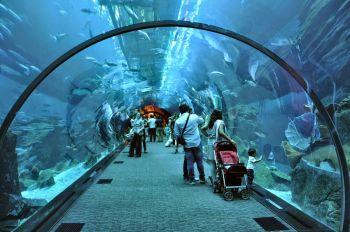 Дубай Молл океанариум